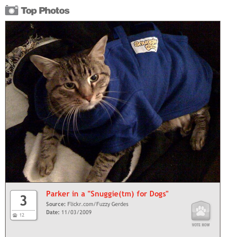 parker_on_pet_charts.png